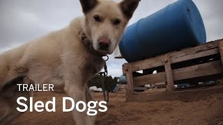 SLED DOGS Trailer | New Release 2017