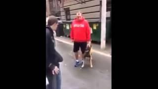 كلب حراسة مدرب يحمي صاحبه. بصورة رائعة
