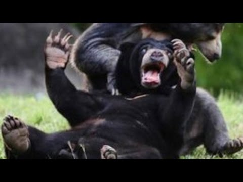 Wild animals can be even funnier than pets Funny wild animals compilation