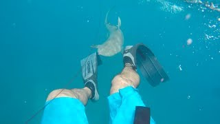 Attacked By 8ft Shark Spearfishing || Florida Keys 2017