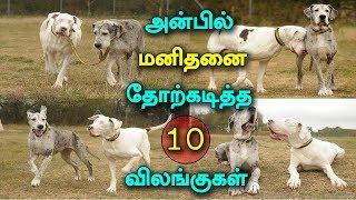 10 Heart Touching Animal Stories That Will Change Cruel Mind