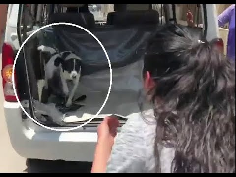 Xxx Mp4 Woman Is Reunited With Lost Dog 3gp Sex