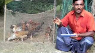Alternative Income Generation: Poultry farming
