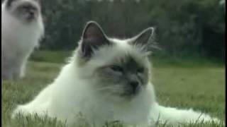 Du chaton au chat