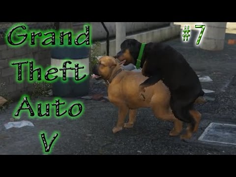 GTA 5 # 7 ➲ Chop 2 ➤ Gay Dog Sex..?..!