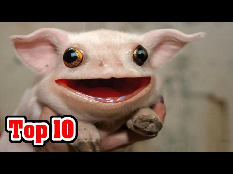 Top 10 CREATURES You Didn t Know EXISTED