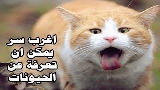 لماذا تصرخ القطط عند التزاوج لن تصدق ان الامر بالعكس ؟