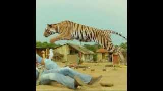 Himmatwala 2013 Ajay Devgan Actions