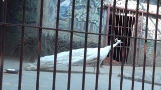 Shopnopuri Dinajpur, Shopnopuri Zoo স্বপ্নপুরী দিনাজপুর, স্বপ্নপুরী চিড়িয়াখানা..............