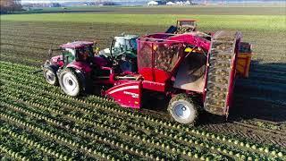 GRIMME Rootster 604 / Knolselderij rooien / Celeriac Harvest / Sellerie ernten / Case IH Maxxum