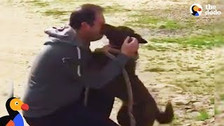 Dog Reunited with Owner Slowly Recognizes Dad After Years in Shelter | The Dodo