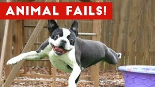 Funniest Animal Fails May 2017 Compilation | Funny Pet Videos