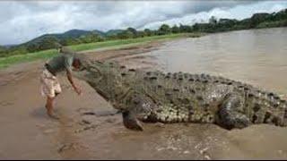 crocodile vs men ( real fight )