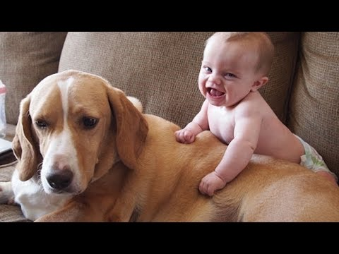 Xxx Mp4 Babies Annoying Dogs – Cute And Funny Baby Amp Dog Compilation 3gp Sex