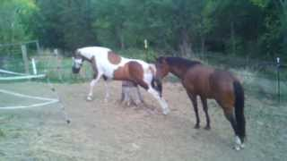 My Horses Might Be Gay