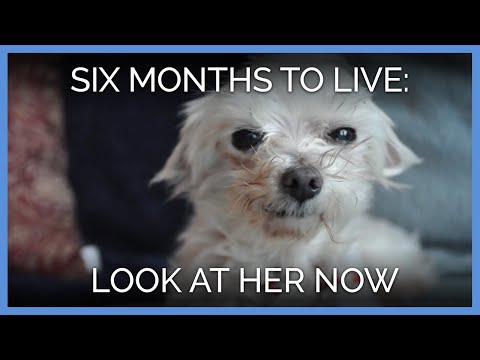 Xxx Mp4 A Dog Was Given Six Months To Live—and Look At Her Now 3gp Sex