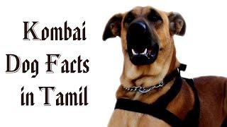 Kombai Dog Facts in tamil | Namma Naattu Naaigal Facts in Tamil | Best Dog | Tamizhar Dharavi