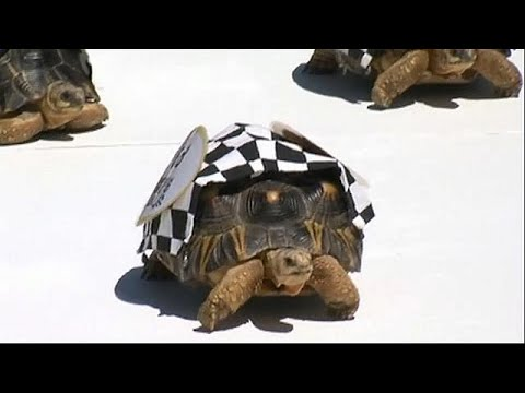 Xxx Mp4 Tortoises Race In The Zoopolis 500 Sprint 3gp Sex
