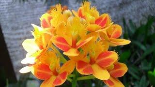 Cómo cultivar Orquídeas - TvAgro por Juan Gonzalo Angel