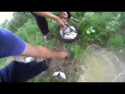 видео ловля накидной сетью
