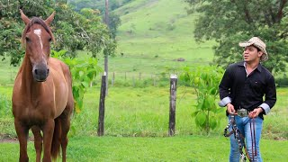 Vida de Gado - Banda Styllo de Vaqueiro