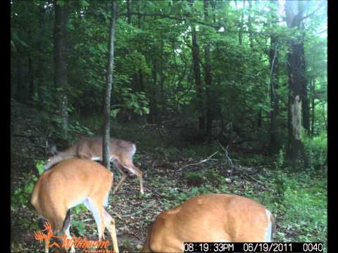Trail Camera Photo's #1. Wildgame Innovations S1.3x