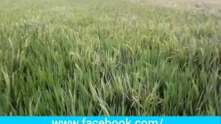 Dhono dhanno puspe vora ধন ধান্য পুষ্পে ভরা HD