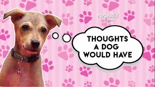 Thoughts A Dog Would Have - POPxo
