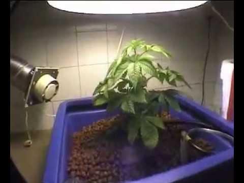 one plant 400W 164G