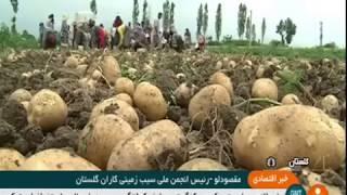 Iran Mechanized Potato harvest, Gorgan county برداشت مكانيزه سيب زميني شهرستان گرگان ايران