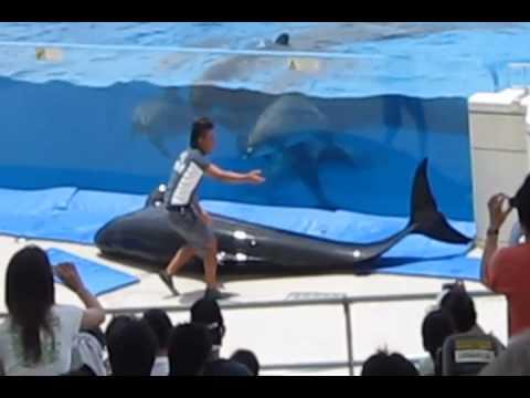 Acidente com baleia piloto em aquário