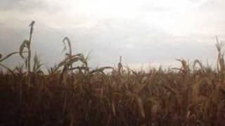 Native American Corn Dance Song