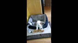 Milo og ulvetimen (husk lyd)