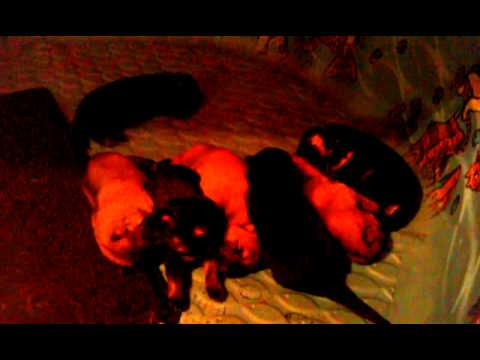 Lacie and Moses Pups 8 days old.3gp