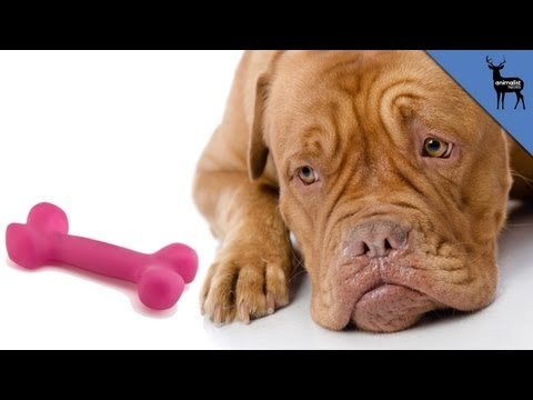 Why Do Dogs Miss Their Owners?