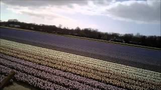 Biking Through the Tulip Fields of Holland 2012