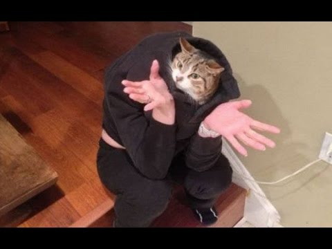 HELP MY HUMAN IS AN IDIOT Funny Animals