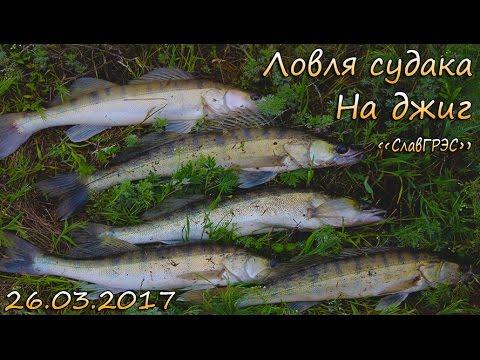 ловля судака весной на малька с берега видео