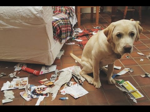 Funny Guilty Dogs Compilation 2015