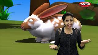 Moral Stories For Children   Hare and Tortoise Story in Gujarati   Storytelling for Kids in Gujarati