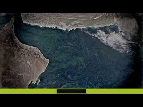ALARMA ANTE LA GIGANTESCA INVASIÓN DE ALGAS EN EL MAR DE ARABIA