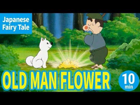 OLD MAN FLOWER (ENGLISH) Animation of Japanese Folktale/Fairytale for Kids