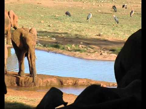 Taita Hills éléphants jour et nuit