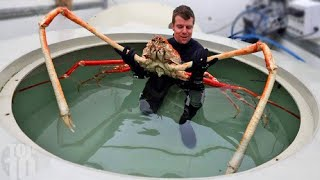 10 Animals You Won't Believe Actually Exist