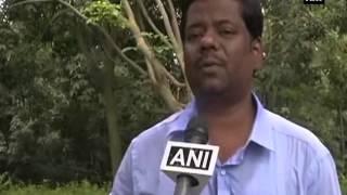 Marijuana plants destroyed in bordering villages of Tripura