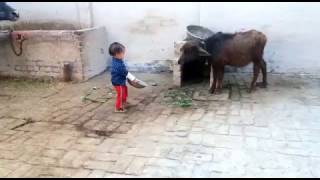 WhatsApp Video Funny kid
