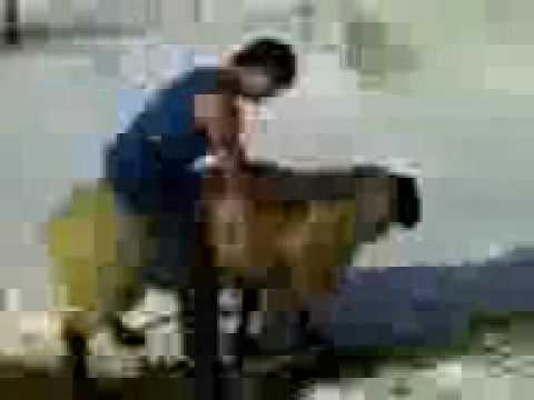 Ultimate Sheep Riding