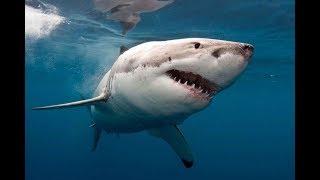 420 marine animals were caught, but only 11 were sharks