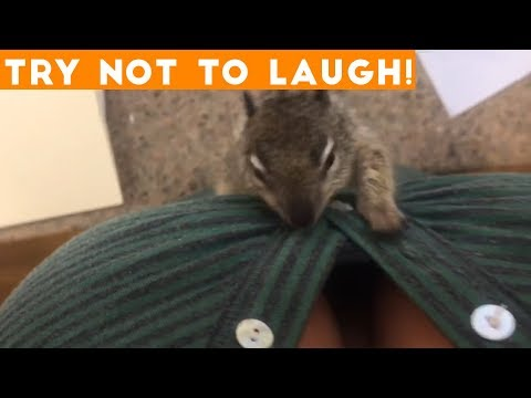 TOP 100 FUNNY ANIMALS of 2018 Try Not To Laugh Challenge March April Funniest Pet Videos