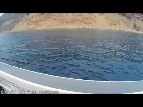 Catching Calico in Catlina